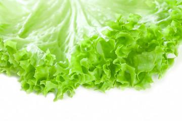 romaine lettuce leaf, on white