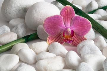 Orchidee, Kieselsteine und Bambus