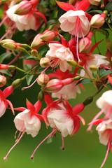 Blumen 146