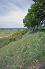 Fields bordering the Canal du Midi