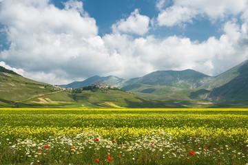 fioritura a Castelluccio di Norcia