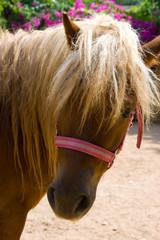 Blone Pony