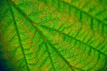 extreme close-up of leaf