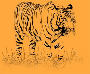 tiger orange. Vector