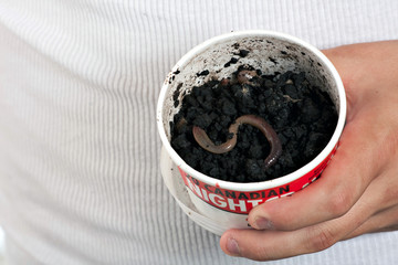 Night Crawler Earth Worms