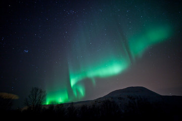 Wall Mural - Aurora Borealis curtains rippling in the sky