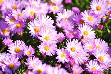 Flowers. Spring. Zarte Natur