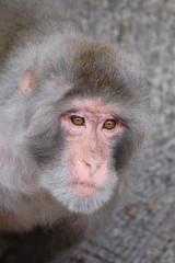 Gesicht eines Affen