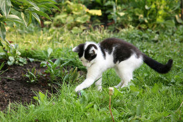 Kitten playing with a ball in the garden