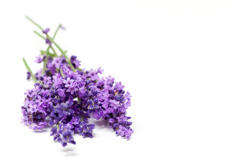 Lavendel  Lavendelbund