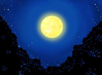 森の中の月夜