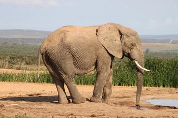 Eléphant au point d'eau