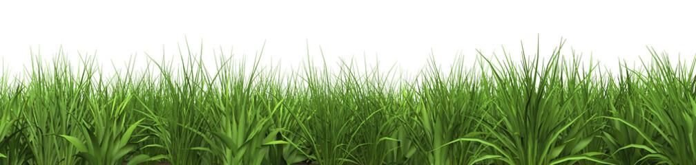 XXL Gras freigestellt