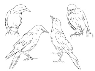4 crows