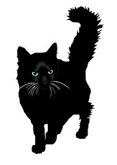 Black cat a silhouette with color eays vector