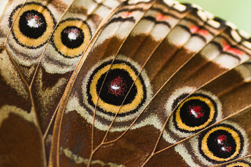 Part of butterfly wing blue Morpho