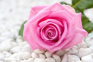 a big pink rose on a bottum of gravel