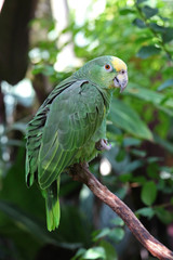 Parrot or macaw with green and yellow feathers