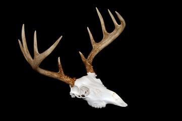 European Deer Mount Angled
