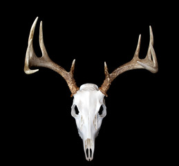 European Deer Mount Top View