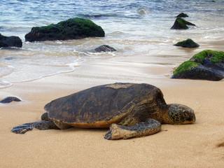 Sea Turtle 02