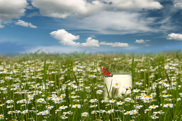 glass of milk in the grass and blue sky