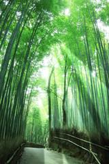 Poster de jardin Olive 竹林