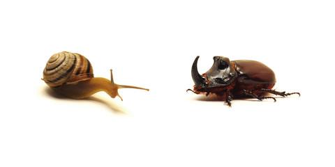 snail versus beetle