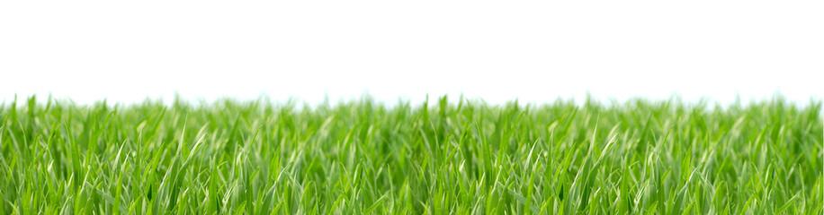 Grass 4