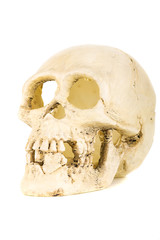 plastic skull isolated on the white background