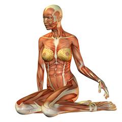 Wall Mural - Muskelstudie Frau sitzend