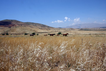 horses running in the field at summer