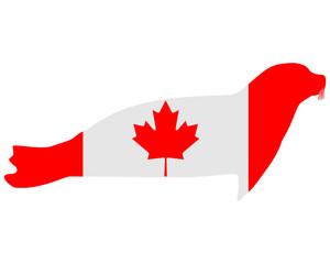 Kanadische Robbe