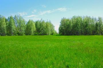 Spacious meadows
