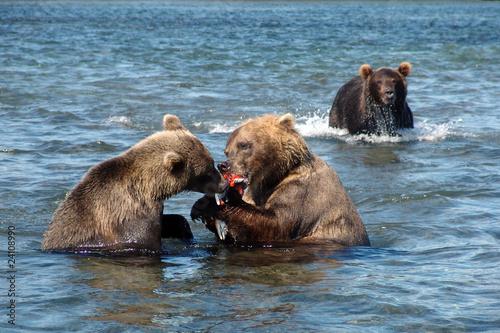 фото во вкусе ловят медведей