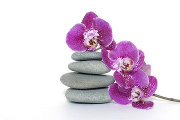 pink orchid with pyramid of stones