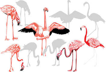 Canvas Prints Flamingo pink flamingo collection on white