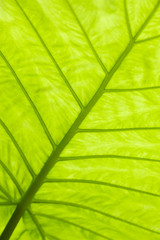Green leaf surface