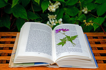 Dried flower in a book