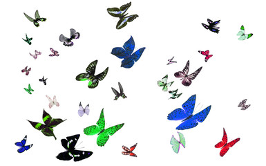 Flying Butterflies. Isolated on white background