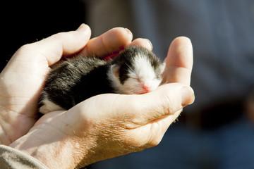 newborn kitten in hands