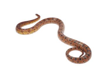 schlange snake 11