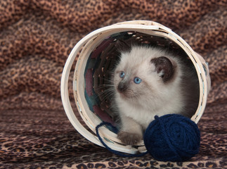 Cute kitten in basket with blue yarn