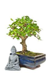 Bonsai mit Buddha-Statur