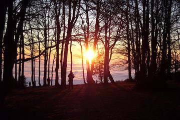 Sonnenuntergang mit Bäumen und Wolkenmeer