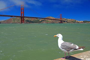 Standing Seagull and Golden Gate Bridge