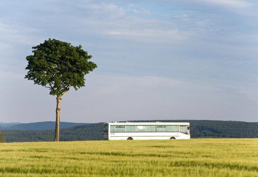 Bus fährt auf Landstraße an Baum vorbei