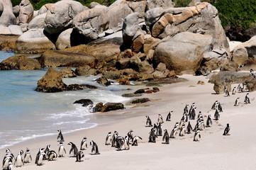 Garden Poster South Africa Südafrika - Pinguin