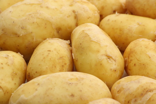 Golden Charlotte Potatoes as a Background