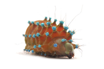 Isolated Caterpillar